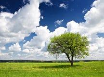 Single tree Stock Photography