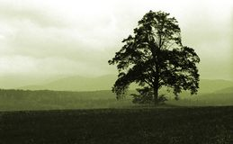 Single tree. Tree in haze Royalty Free Stock Photos