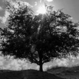 Tree against the sky. A single tree against a sky with clouds and sunlight stock image