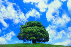 Single tree against a cloudy blue sky Royalty Free Stock Image