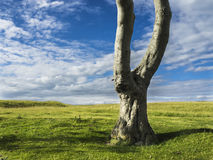 A single tree against the sky. Simple picture, tree, grass and sky royalty free stock photography