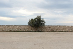 A single tree against a stone wall, cloudy sky Stock Image