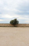 A single tree against a stone wall, cloudy sky Stock Photos
