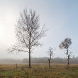 Single tree in the autumn field. Stock Photos