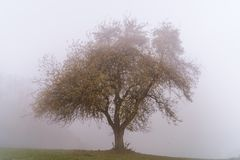 Single tree in the autumn mist royalty free stock photography