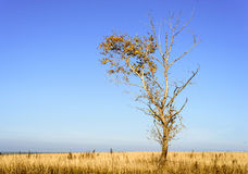 Single Tree in Barren Landscape Background Stock Photography