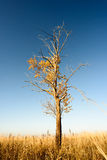 Single Tree in Barren Landscape Background Royalty Free Stock Photography