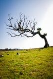 Single tree. A beautiful old single tree Stock Photo