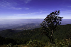 Single tree at beautiful view Royalty Free Stock Images