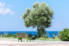 Single tree and bench by Mediterranean Sea. Stock Photos
