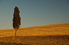 A single tree with blue sky Royalty Free Stock Photo