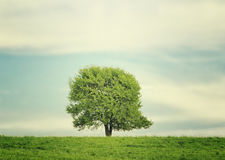 Single tree in the centre of the meadow in summer landscape under blue sky with clouds Royalty Free Stock Photo