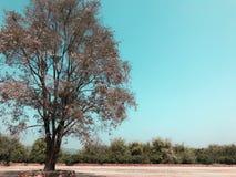 The single tree stock photography