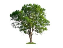 single tree with clipping path stock photo