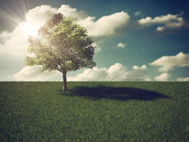 Single tree with Clouds Royalty Free Stock Image