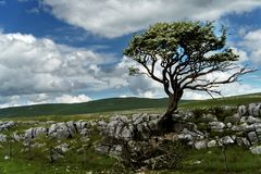 Single Tree with clouds and rocky forground. stock photos
