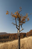 Single tree with colored leafs Stock Images