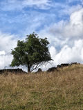 Single tree and crumbling dry stone wall in a field Stock Images