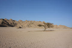 Single tree in the desert Stock Photo