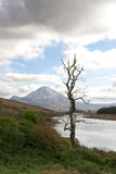 Single tree in Donegal scenic view Stock Photos