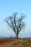 Single tree in a field Stock Image