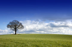 Single tree in a field Stock Images
