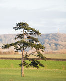 Single Tree in a Field Royalty Free Stock Photos
