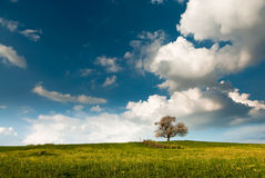 Single tree on field in spring Stock Image