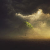 Single Tree in field. The sun is shining through the clouds on a single tree in the field stock image