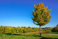 Single tree on a field on a sunny day in autumn royalty free stock image