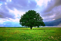 Single tree in field. Under magical cloudy sky stock image