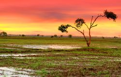 Single tree in the fields Royalty Free Stock Photos