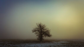 Single tree in the fog Royalty Free Stock Photo