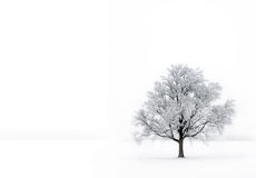 Single tree in the fog with hoar-frost Stock Photography