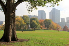 Single tree in foreground, framing hazy cityscape Stock Photography