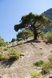 Tree. Single tree in front of mount and lue sky Royalty Free Stock Photo