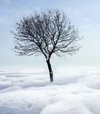 Single tree in frost. Winter landscape with one solitaire tree royalty free stock images