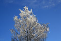 Single tree in frost Royalty Free Stock Image