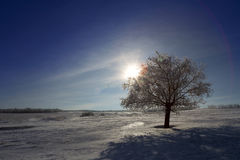 Single tree in frost Royalty Free Stock Photography