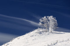 Single tree in frost and landscape in snow against blue sky. Win Royalty Free Stock Photos