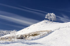 Single tree in frost and landscape in snow against blue sky. Win Royalty Free Stock Photography