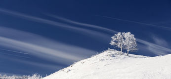 Single tree in frost and landscape in snow against blue sky. Win Stock Photography
