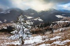 Single tree in frost Stock Photo