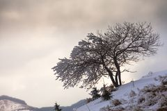 Single tree in frost Royalty Free Stock Images