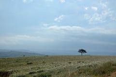 SINGLE TREE IN GRASSLAND LANDSCAPE Stock Photography