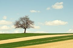 Single tree on green field Royalty Free Stock Photography