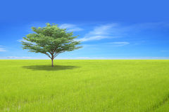 Single tree on green field. And blue sky stock photos