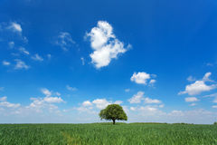 Single tree in a green field with blue sky and white clouds Stock Photo