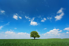 Single tree in a green field with blue sky and white clouds Stock Photos