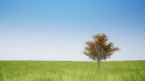 Single tree and green field on clear sky. Single tree and green field on clear blue sky stock footage